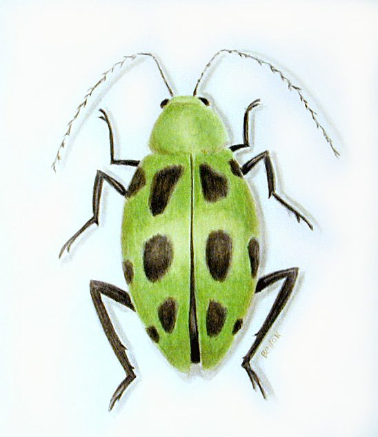 green spotted bug